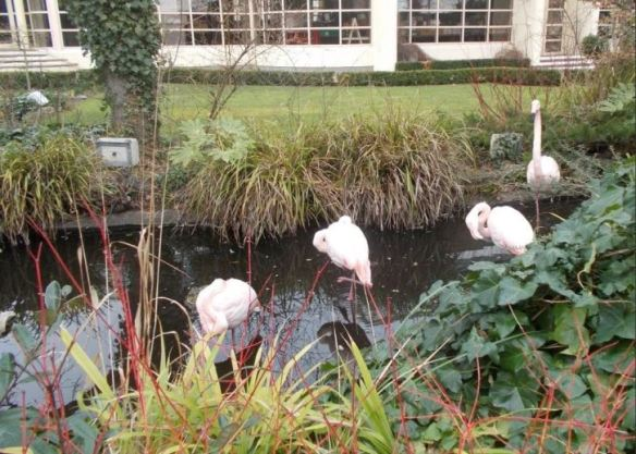 Flamingos in the Kensington Roof top gardens